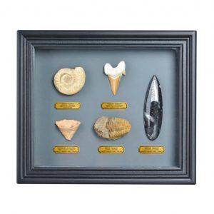 Cornice In Legno Con Fossili Assortiti