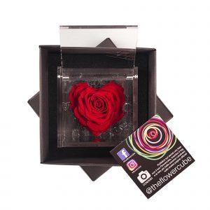 Rosa rossa a forma di cuore